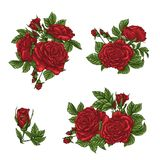 Set of red rose flower, bud and leaves. Isolated on white vector illustration Royalty Free Stock Images