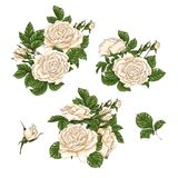 Set of red rose flower, bud and leaves. Isolated on white vector illustration Stock Image