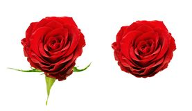 Set of red rose flowers. Isolated on white Royalty Free Stock Photography