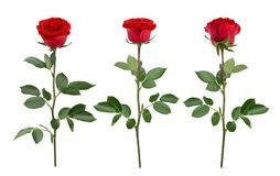 Set with red roses. As design elements. Stock Image