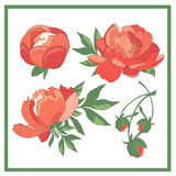 Set of red roses. Collection of red flowers.Vector illustration.  Royalty Free Illustration