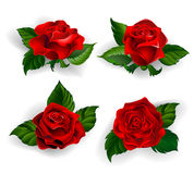 Set of red roses. With green leaves on a white background Royalty Free Stock Photography