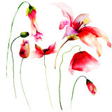 Set of red watercolor flowers. Hand drawn floral elements for design Royalty Free Stock Images