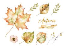 Set of red and yellow autumn watercolor leaves and berries, hand drawn design foliage elements decoration. Set of red and yellow autumn watercolor leaves and Vector Illustration