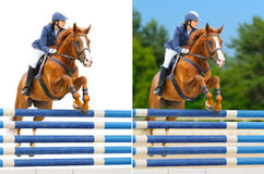 Set - Reitersport: zeigen Sie das Springen Lizenzfreie Stockbilder