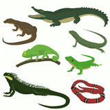 Set of reptiles and amphibians. Isolated on white background Stock Photos