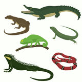 Set of reptiles and amphibians. Set of reptiles and amphibians isolated on white background. Lizard, crocodile, snake, gecko, iguana, monitor stock illustration
