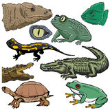 Set of reptiles. Set of illustrations of reptiles Royalty Free Stock Images