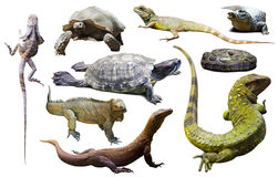 Set of reptiles isolated Royalty Free Stock Photos