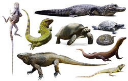 Set of reptiles isolated Stock Photo