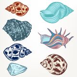 Set of retro seashells in vintage hand drawn style for design royalty free stock photos