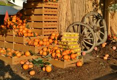 Set of rich harvest with oranges, lemons and wooden wheels of rural aspect. Set of rich harvesting with oranges, lemons and wooden wheels of rural aspect royalty free stock images