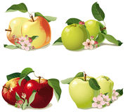 Set of ripe apples Stock Images