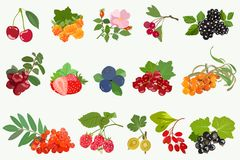 Set of ripe berries with leaves on white background. Vector Royalty Free Stock Image