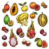 Set of ripe exotic fruits. Exotic fruits isolated icons of grapefruit, mandarin and guava, papaya or figs, passion fruit and dragon fruit Pitaya. Vector sketch Stock Images