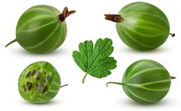 Set ripe green gooseberry whole, cut in half with leaf Stock Photo