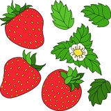 Set ripe juicy strawberries. Set of three red ripe strawberry, green leaves and white flower. Vector illustration Royalty Free Stock Images