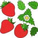 Set ripe juicy strawberries Royalty Free Stock Images