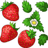 Set ripe juicy strawberries. Set of three red ripe strawberry, green leaves and white flower. Vector illustration Royalty Free Stock Photo