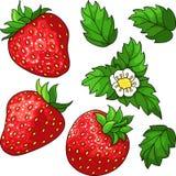 Set ripe juicy strawberries Royalty Free Stock Photo