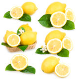 Set of ripe lemon fruits isolated Royalty Free Stock Photography