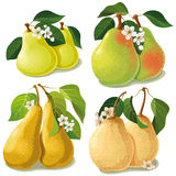 Set of ripe pears Royalty Free Stock Image