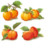 Set of ripe persimmon Royalty Free Stock Photo