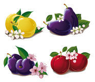 Set of ripe plums Royalty Free Stock Photography