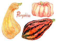 Set of ripe pumpkins. Hand Painted Watercolor Illustration: Set of ripe pumpkins Stock Photo