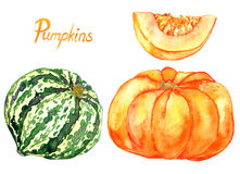 Set of ripe pumpkins and slice. Hand Painted Watercolor Illustration: Set of ripe pumpkins and slice Royalty Free Stock Photos