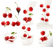 Set of ripe sweet cherries with leaves and splash of milk. Royalty Free Stock Photography