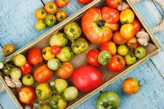Set of ripe tomatoes in the wooden tray, blue wooden background royalty free stock images