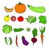 Set of ripe vegetables. Cartoon. Hand drawing vector illustration