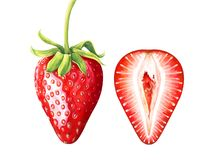 Set of ripe watercolor strawberries isolated on white background. Set of ripe strawberries isolated on white background. Hand drawn watercolor illustration Stock Image