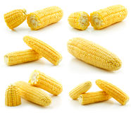 Set of Ripe Yellow Corn Isolated on White stock photography