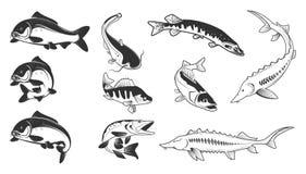 Set of river fish marks. River carp,. Set of river fish marks.  Vector illustration Stock Photo