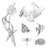 Set ręka rysujący rocznik projektujący lub kolekcja grawerowaliśmy zwierzęta dla projekta Zdjęcia Stock