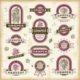 Roczników winogron etykietki ustawiać Zdjęcie Royalty Free