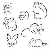 Set of rodents Royalty Free Stock Photo