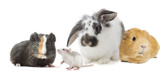 Set of rodents Royalty Free Stock Photos