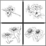 Set of Romantic vector background with three echinaceas. Stock Photos