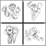 Set of Romantic vector background with three echinaceas. Royalty Free Stock Image