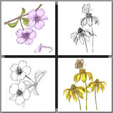 Set of Romantic vector background with three echinaceas. Stock Photography