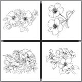 Set of Romantic vector background with three echinaceas. Set of Romantic vector background with hand drawn flowers  on white.  Ink drawing illustration. Line Stock Image