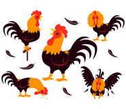 Set of Rooster Movements Royalty Free Stock Photo