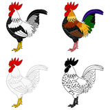 Set of roosters Royalty Free Stock Photography