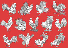 Set roosters coloring on orange-red. Set roosters coloring on orange background. Decorative chicken monochrome. Coloring page. A symbol of the Chinese new year Royalty Free Stock Image