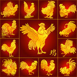 Set roosters gold on red. Set roosters gold with different characters on red background and hieroglyph cock. Fiery red chicken symbol of the Chinese new year Stock Image
