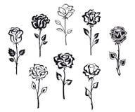 Set of rose flowers Stock Photos