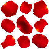 Set of rose petals Stock Image
